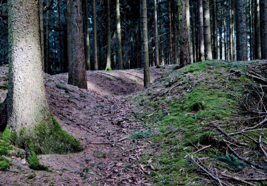 Wallburg auf dem Loermund