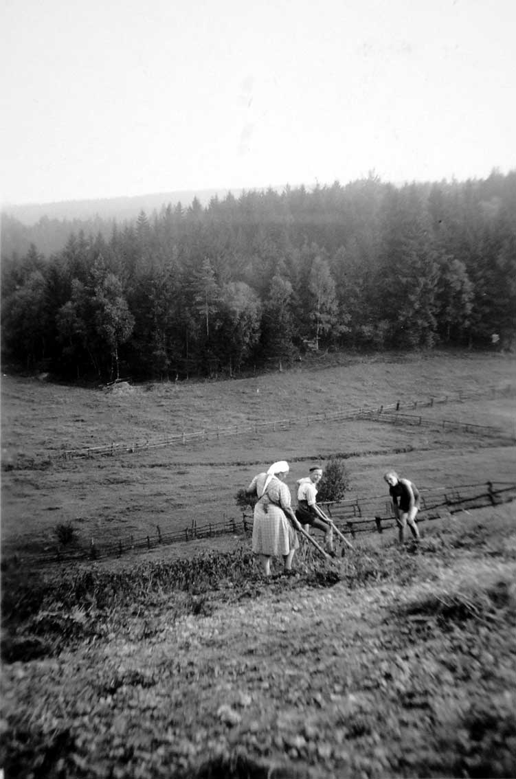 """Kartoffelernte am Rande des Quomecketales / Am steilen Talhang unterhalb des Redderweges und Zu den Berggärten lagen zahlreiche Gärten und Ackerstücke der Sichtigvorer """"kleinen Leute"""". In den frühen 1950er Jahren graben auf dem Bild Agnes Plesser (Jaggers) und die Söhne Herbert und Manfred ihre Hauskartoffeln aus."""