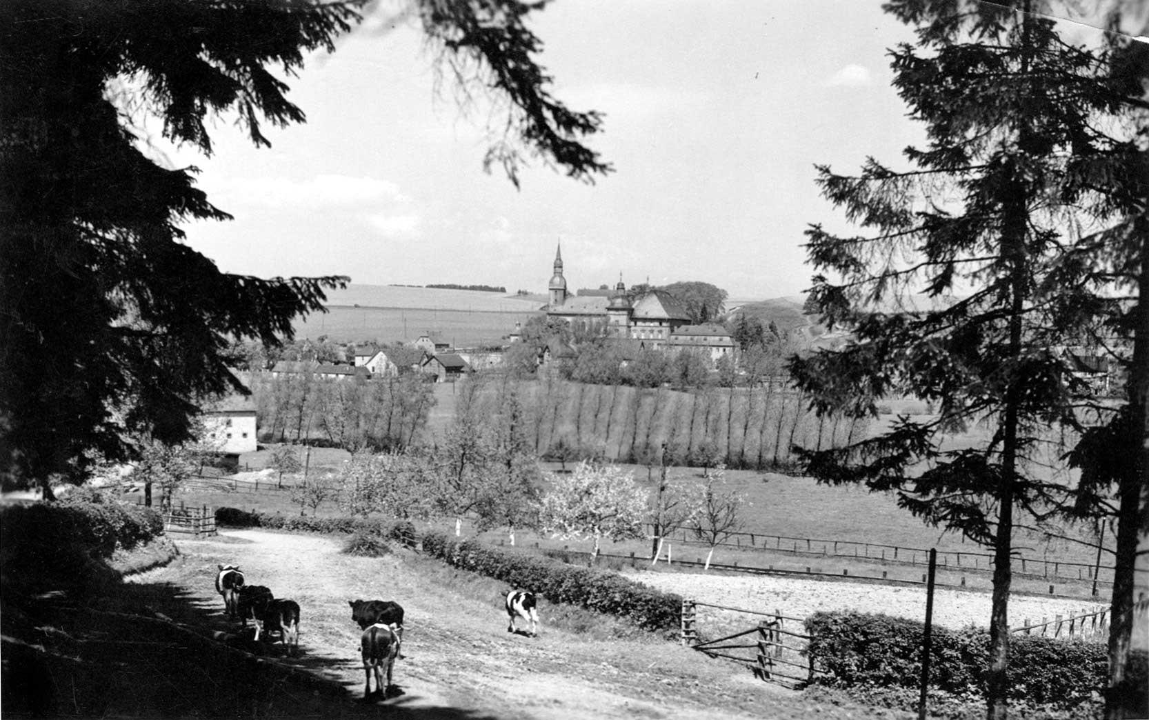 Archiv-Bild 6474 / eine kleine Kuhherde zieht vom Erlenbruch nach Hause